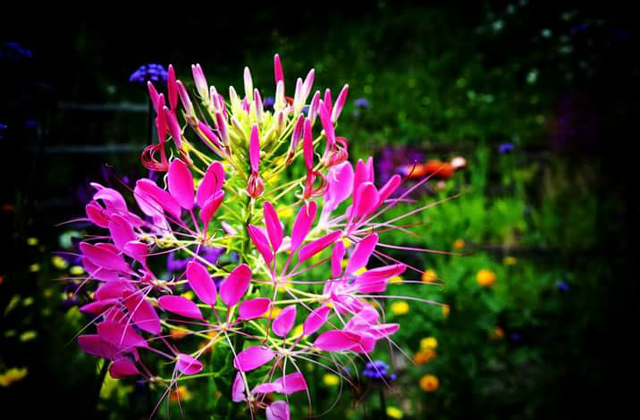 Une photo de la nature ..vue avec mon oeil 😃 Hello World Check This Out Nature Photography Flowers_collection Relaxing Flowers,Plants & Garden Montagne_my_life Montagnes 🏔 AlpesFrancaises Randonnée Enjoying Life Nature Beauty Naturephotography Naturelovers Nature_collection Landscape_collection EyeEmNatureLover Holidays ☀ Shooting Landscape_photography Landescape_lovers Beauty In Nature Trip Photo Tre