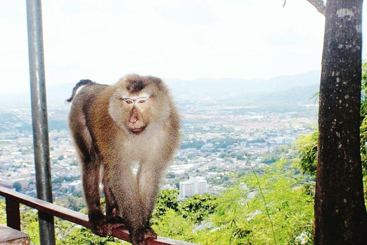 one animal, animal themes, animal wildlife, monkey, animal, animals in the wild, mammal, no people, day, outdoors, ape, nature, baboon, sky
