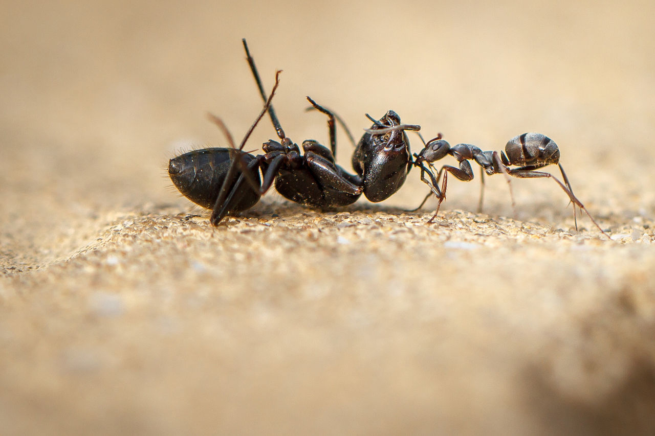 Close-Up Of Ants On Rock