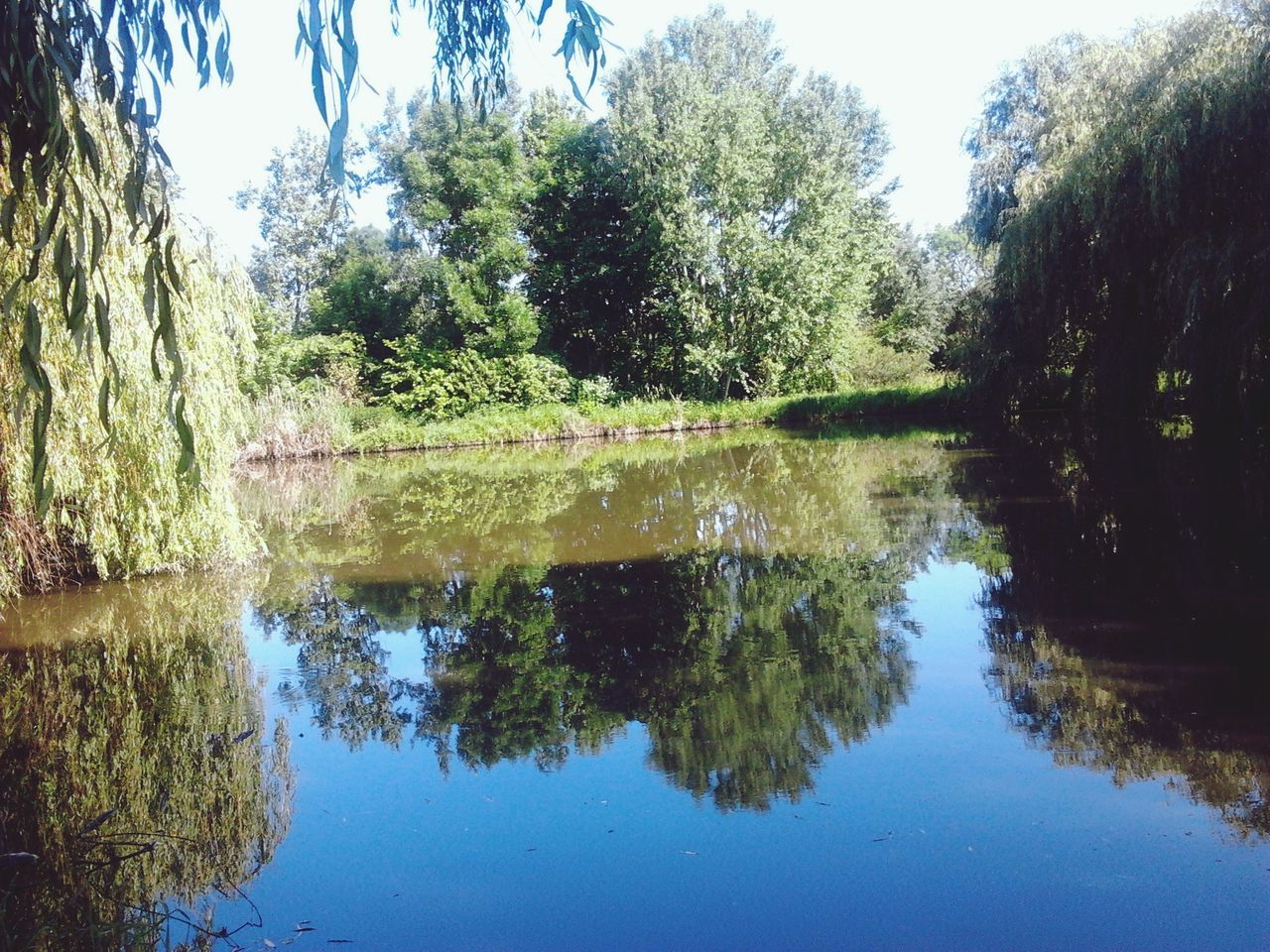 reflection, tree, water, lake, nature, growth, no people, tranquility, day, outdoors, beauty in nature, sky