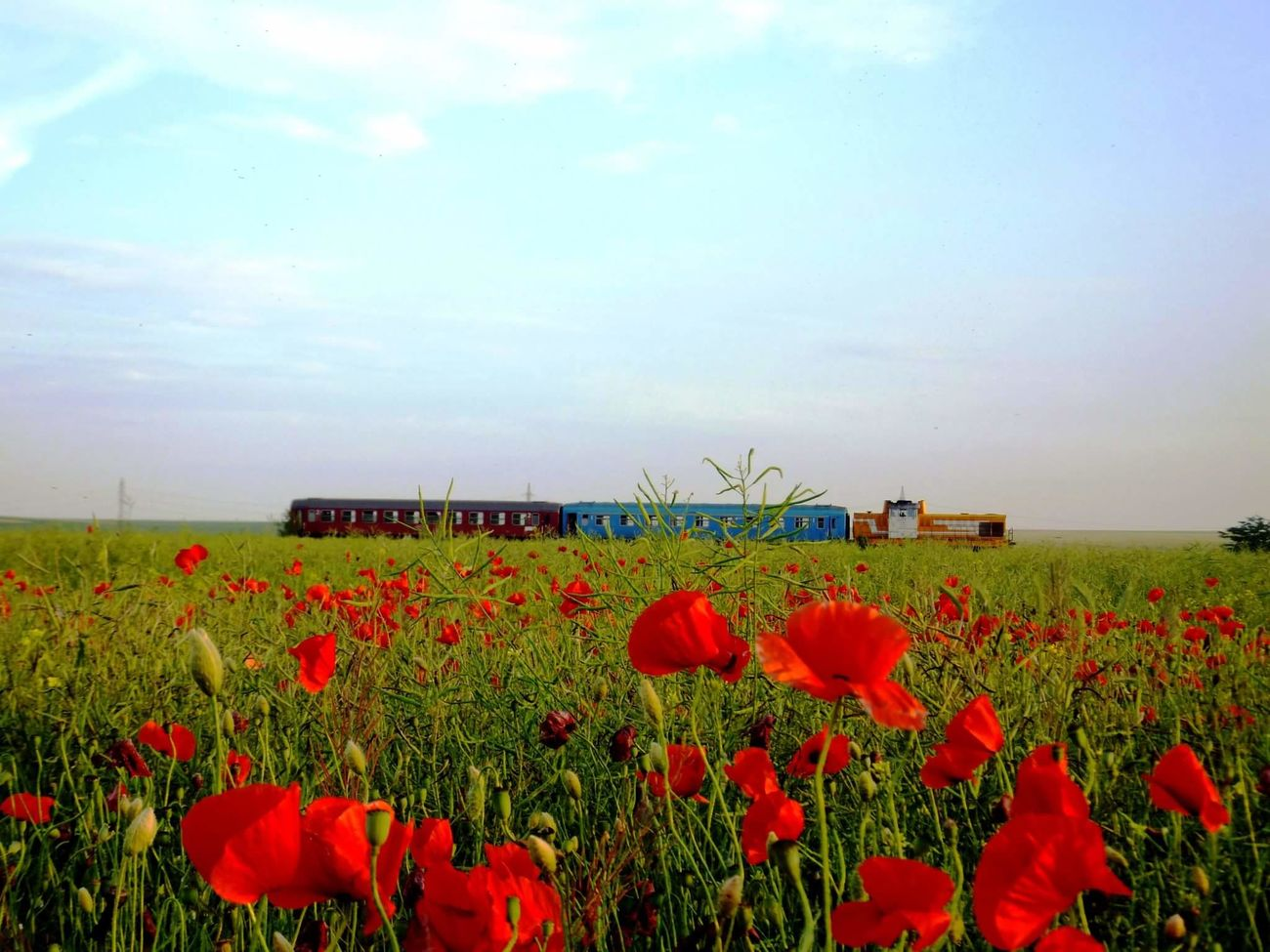 Countryside Landscape Train Agriculture Beauty In Nature End Of May No People Poppy Fields Trip Photo Best Shot Short Trip Romanian Lands