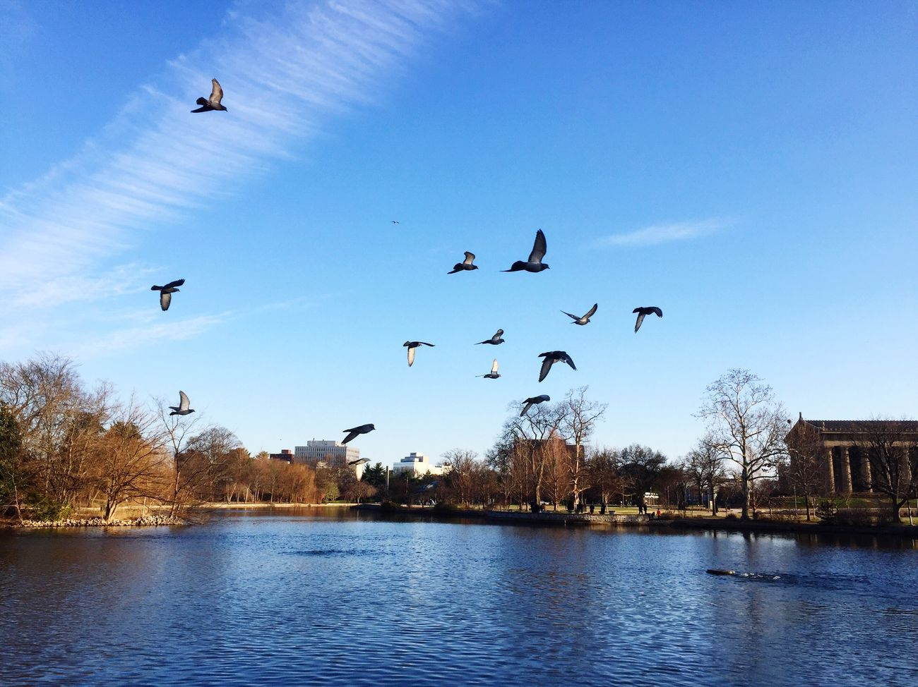 Flying Bird Waterfront No People Clear Sky Outdoors Beauty In Nature Parthenon Centenial Park