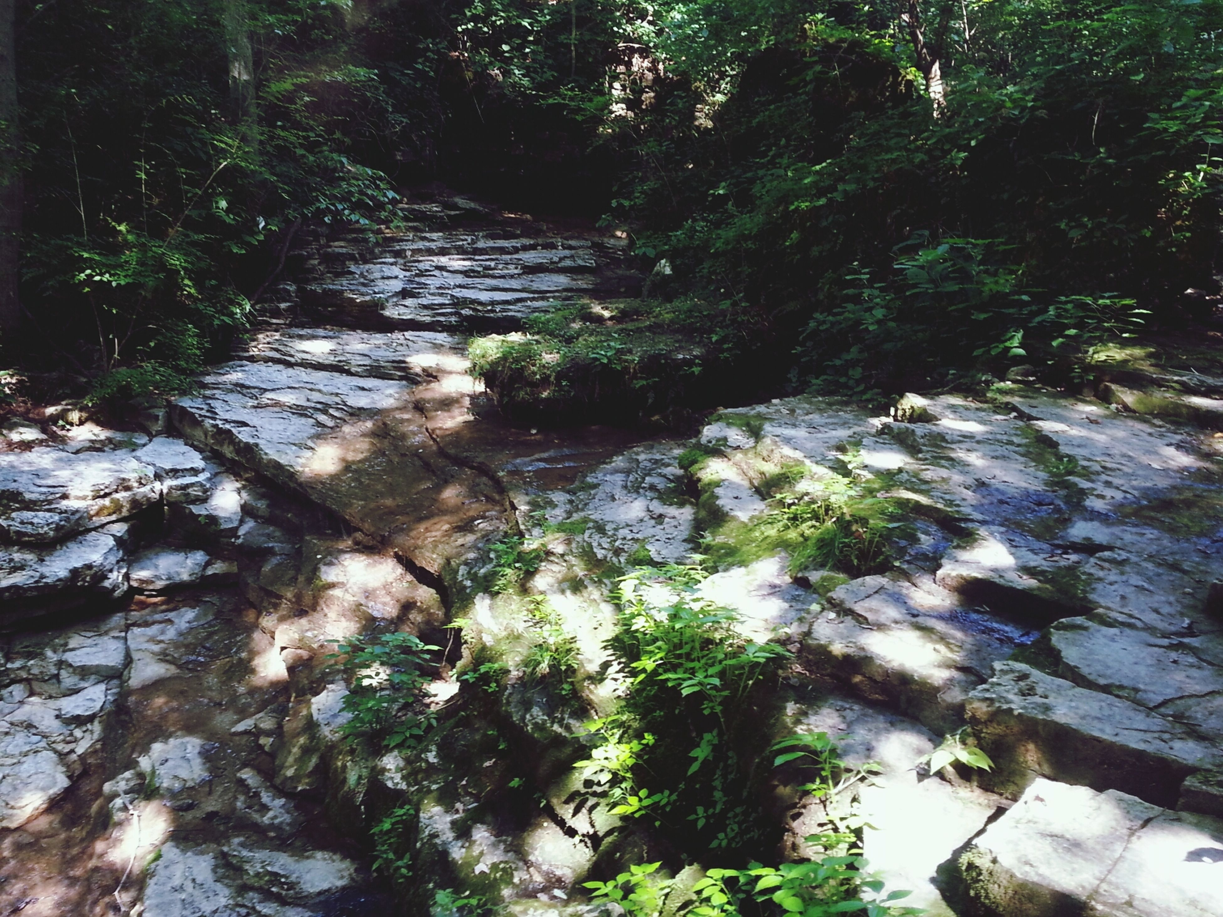 tree, forest, water, nature, growth, tranquility, beauty in nature, rock - object, stream, tranquil scene, scenics, moss, green color, flowing water, plant, high angle view, tree trunk, river, day, outdoors
