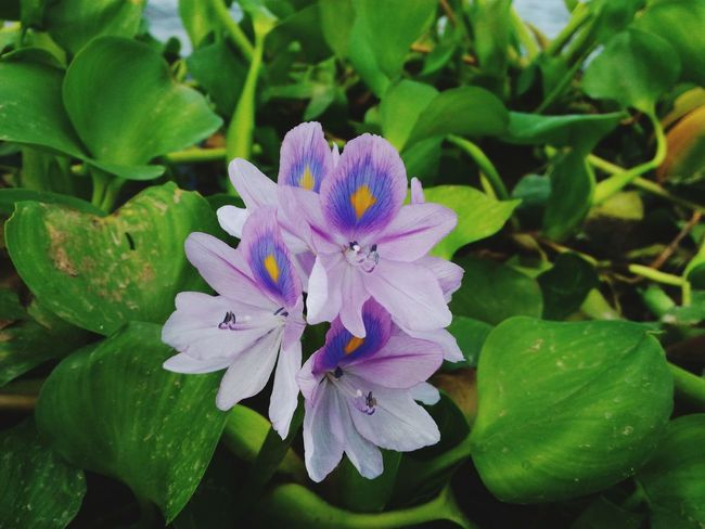Beach Purple Flower Focused Brijesh Photography