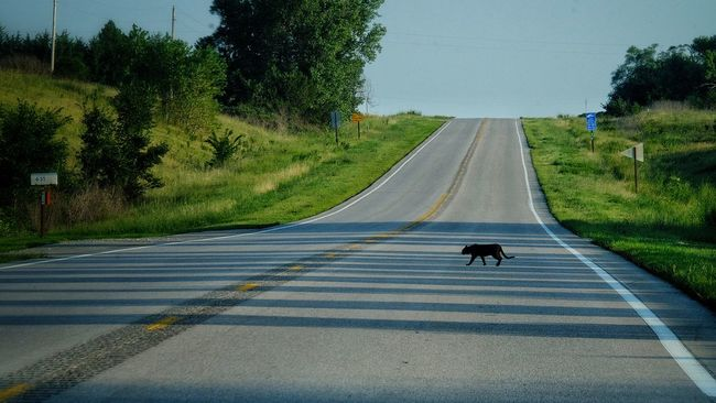 Omaha, Nebraska August 2016 A Day In The Life Cat Cats Check This Out Composition Country Road Crossy Road Diminishing Perspective EyeEm Best Shots Fuji Life In Motion Light And Shadows On The Road Photo Essay Road Street Photography Streetphotography The Way Forward Watch Out!