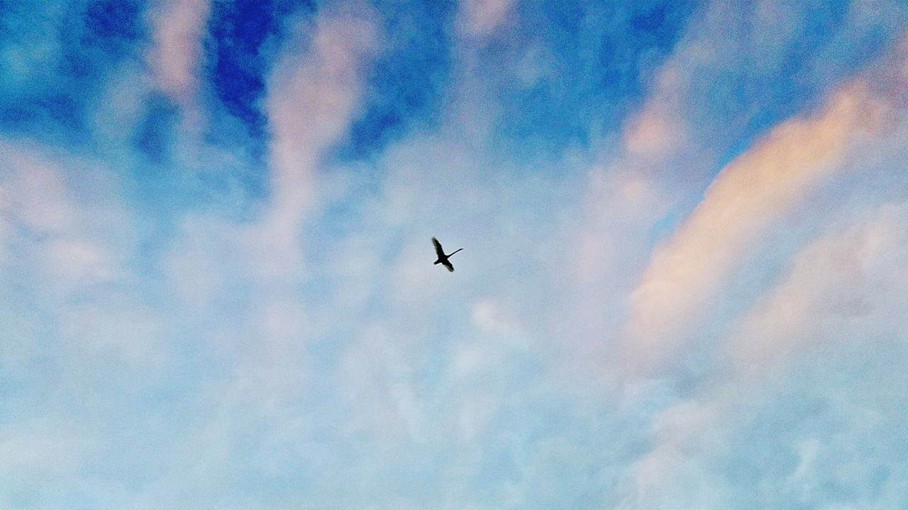 Flying Solo Lone Bird Alone Time Beautiful Sky