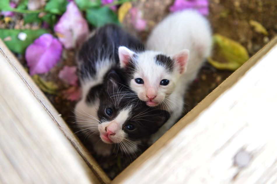 Toto and Nougat 😆😍😻❤️❤️❤️💖💖💖 Newborn Babies Kittens My Cats Domestic Cat Pets Animal Themes Domestic Animals Feline Mammal Cat Looking At Camera Whisker No People Togetherness High Angle View Day Portrait Outdoors Kitten Close-up Four Legs And A Tail