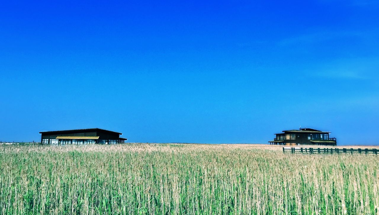 Dongtan wetland Wetland Landscape Reeds Natural Birds Reserve Zone Sky Skyline No People Tranquility Tranquil Scene By Iphone 6+