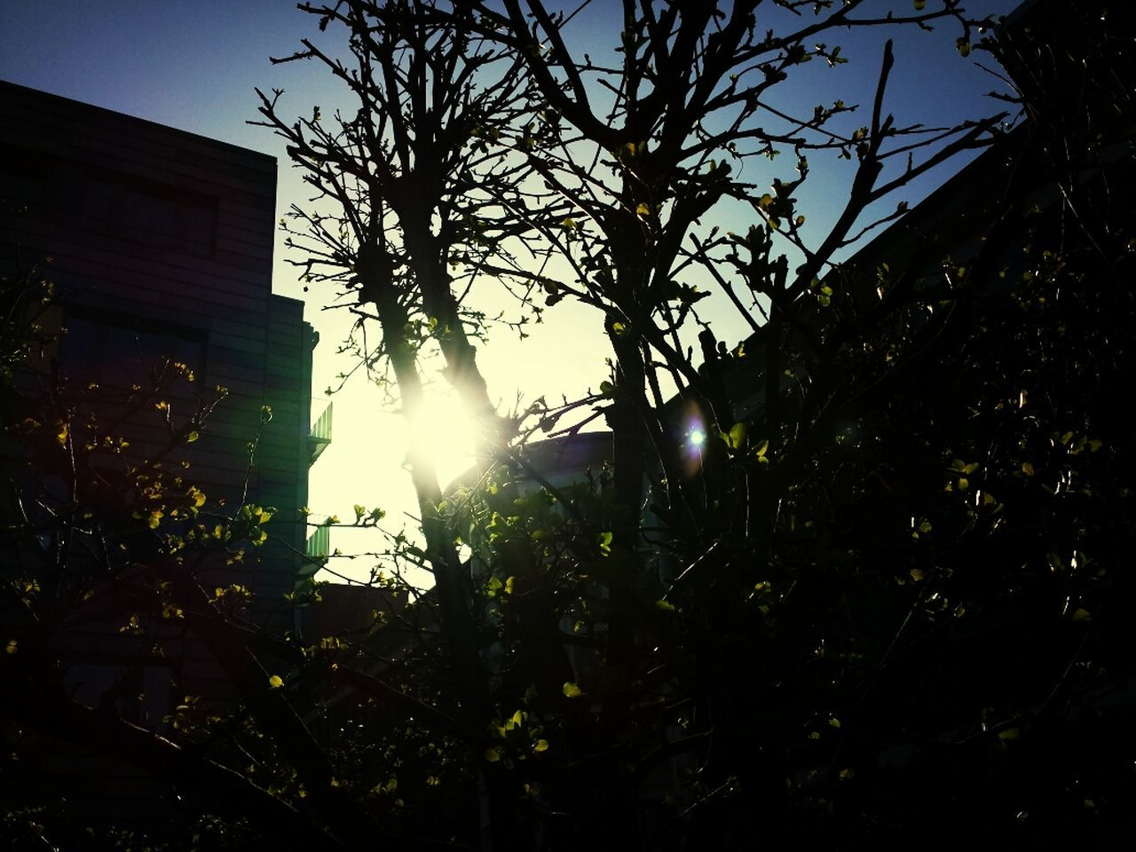 tree, sunlight, lens flare, low angle view, sun, outdoors, no people, nature, growth, silhouette, branch, building exterior, architecture, leaf, beauty in nature, sky, day