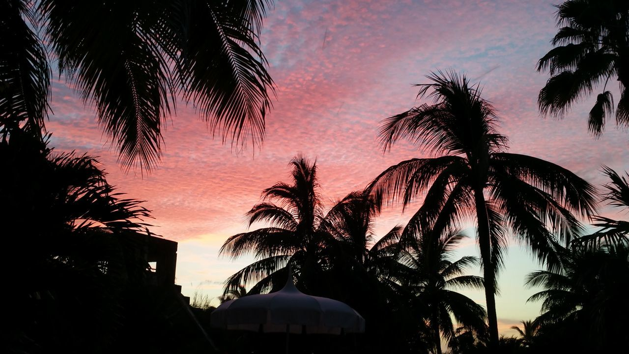 After The Rain Multi Colored Nature Outdoors Palm Tree Silhouette Sunset