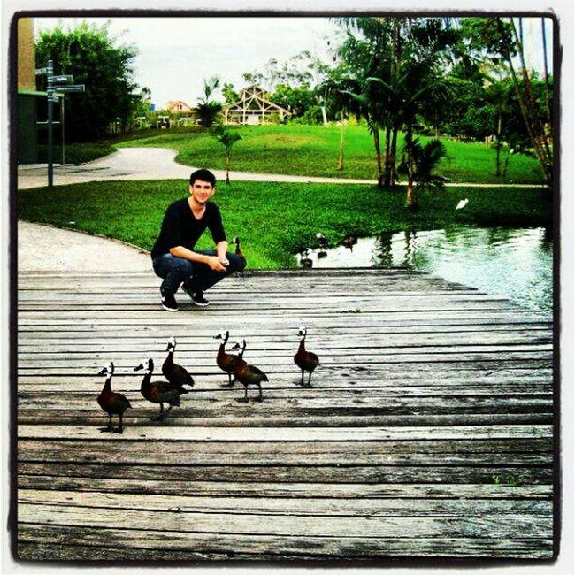 Duck Pato Mangal Garças natureza natural Deus God mangaldasgarcas belem pa