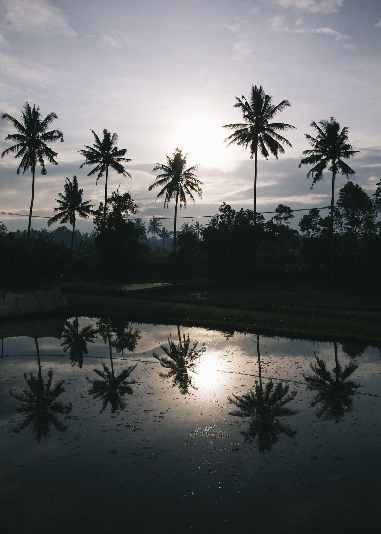 Ubud, Bali Bali Beauty Cloud - Sky Exotic Exoticism Hindu Holiday INDONESIA Palm Tree Reflection Silhouette Sky Sunset Travel Travel Travel Destinations Travel Photography Traveling Travelphotography Tree Tropical Climate Ubud Vacation Vacations Water