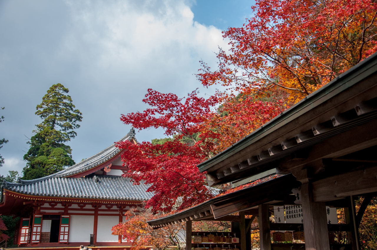 tree, architecture, built structure, building exterior, autumn, low angle view, change, outdoors, sky, no people, traditional building, day, leaf, roof, place of worship, eaves, religion, nature, growth, red, branch