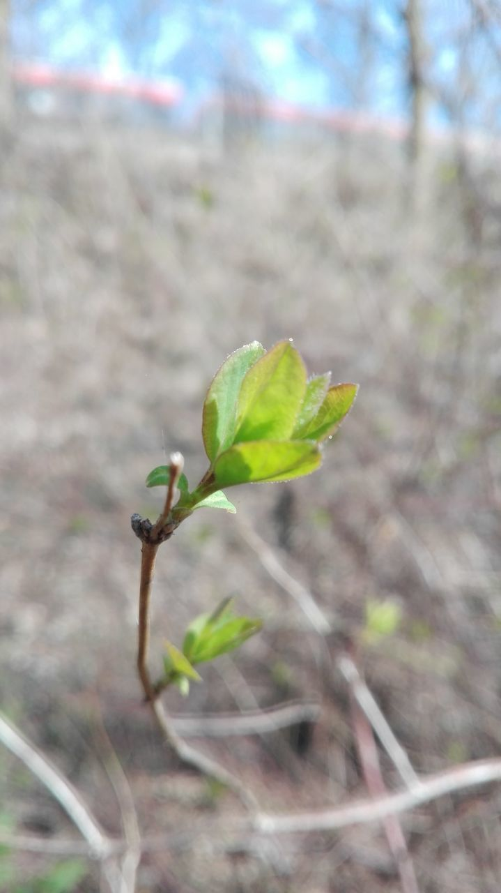 growth, plant, nature, day, no people, close-up, fragility, focus on foreground, leaf, outdoors, new life, beauty in nature, freshness