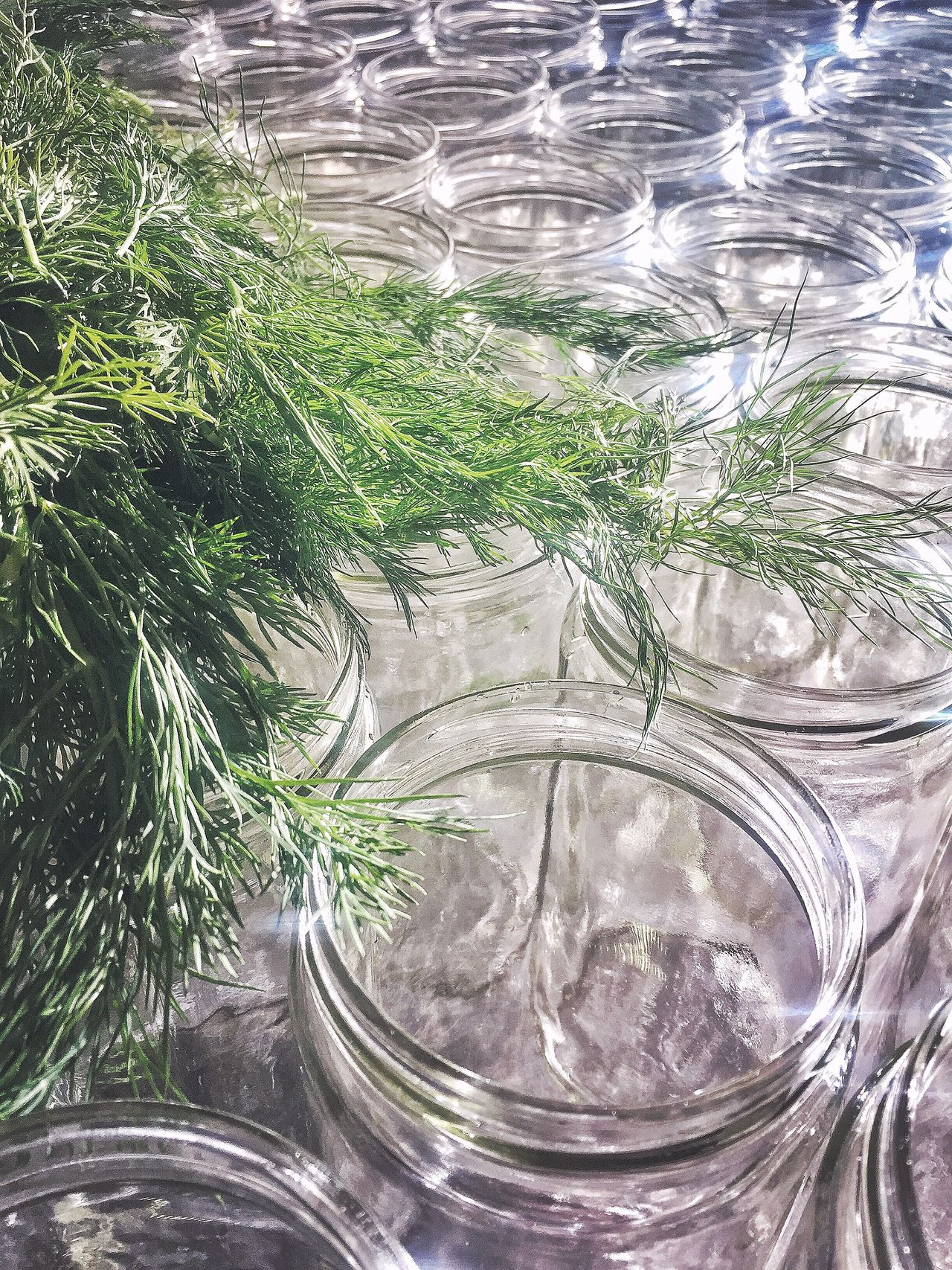 Dill + Jars Reflection Jars  Glass Green Foodphotography Eye4photography  Photography Brooklyn Cooking Pickeling