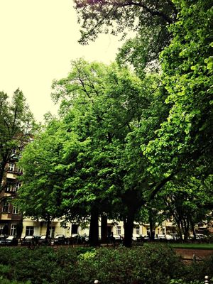 Green at Comeniusplatz by Uecker