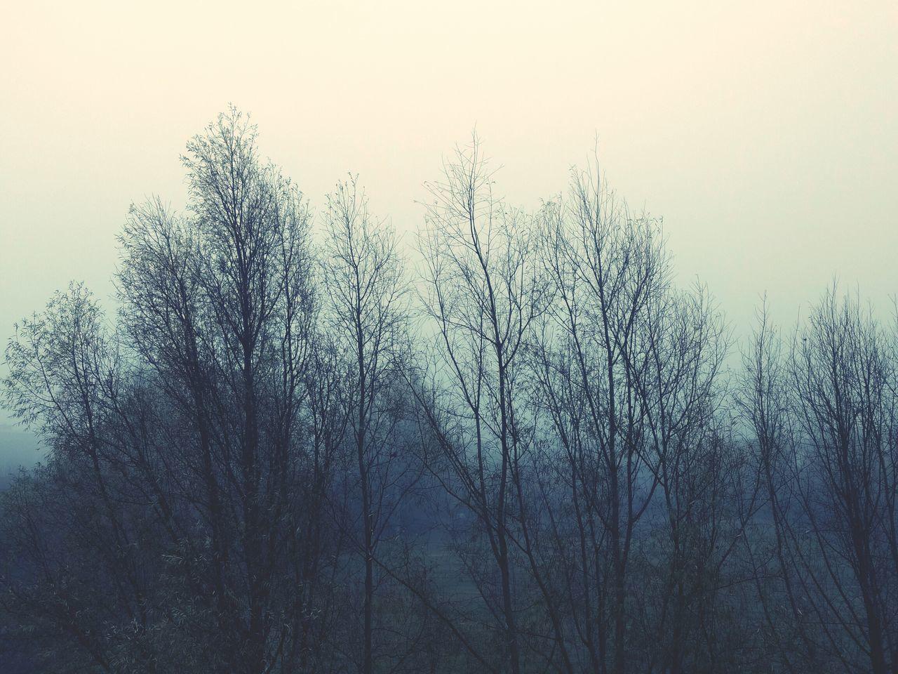 Fog Foggy Morning Autumn Cloudy Fall