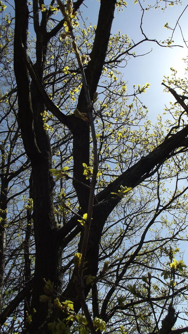 Backgrounds Beauty In Nature Blue Branch Branches Branches And Sky Close-up Day Green Green Color Growth Growth Growth In Bloom High Section Lookingup Low Angle View Nature No People Outdoors Scenics Sky Spring Tranquility Tree Tree Trunk