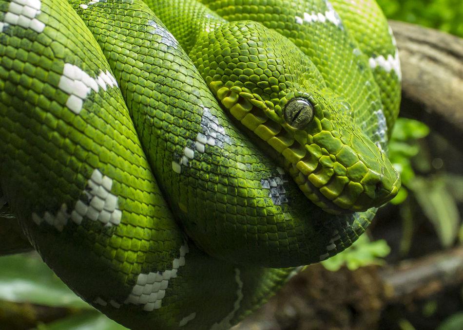 Beautiful stock photos of snakes, Animal Markings, Animal Themes, Animal Wildlife, Animals In The Wild