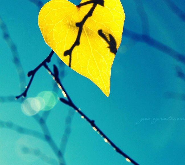 Taking Photos 撮影 落ち葉🍂 Shape Of Heart こんばんは Good Evening おやすみなさい✨ Good Night Goodnight World.... EyeEm Japan EyeEm Gallery 日本 Sky Leaf 🍂 Autumn Leaves Natural Beauty Nature_collection