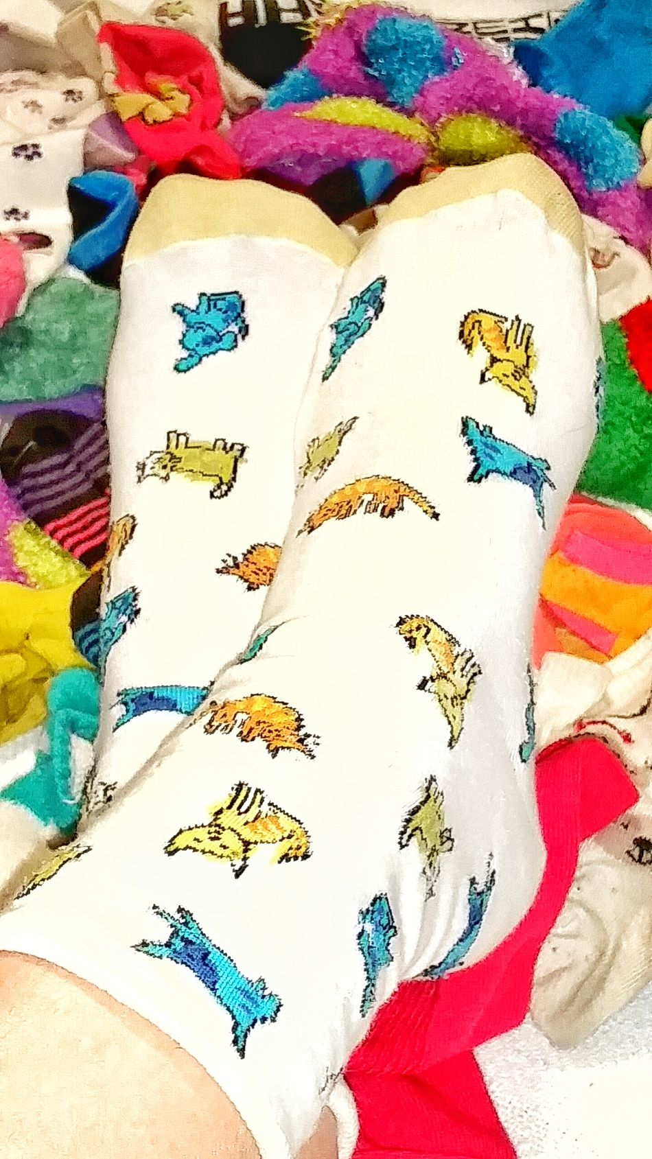 TK Maxx Socksie Colorful Socks Clothing Long Socks Multicolors  Pattern Cute Socks Texture Comfortable Cozy Bright Colors Variaty Foot Abundance Socks Design Funny Socks Multi Colored Large Group Of Objects Soft Texture Colorful Fuzzy Dog Socks Close-up Dotted