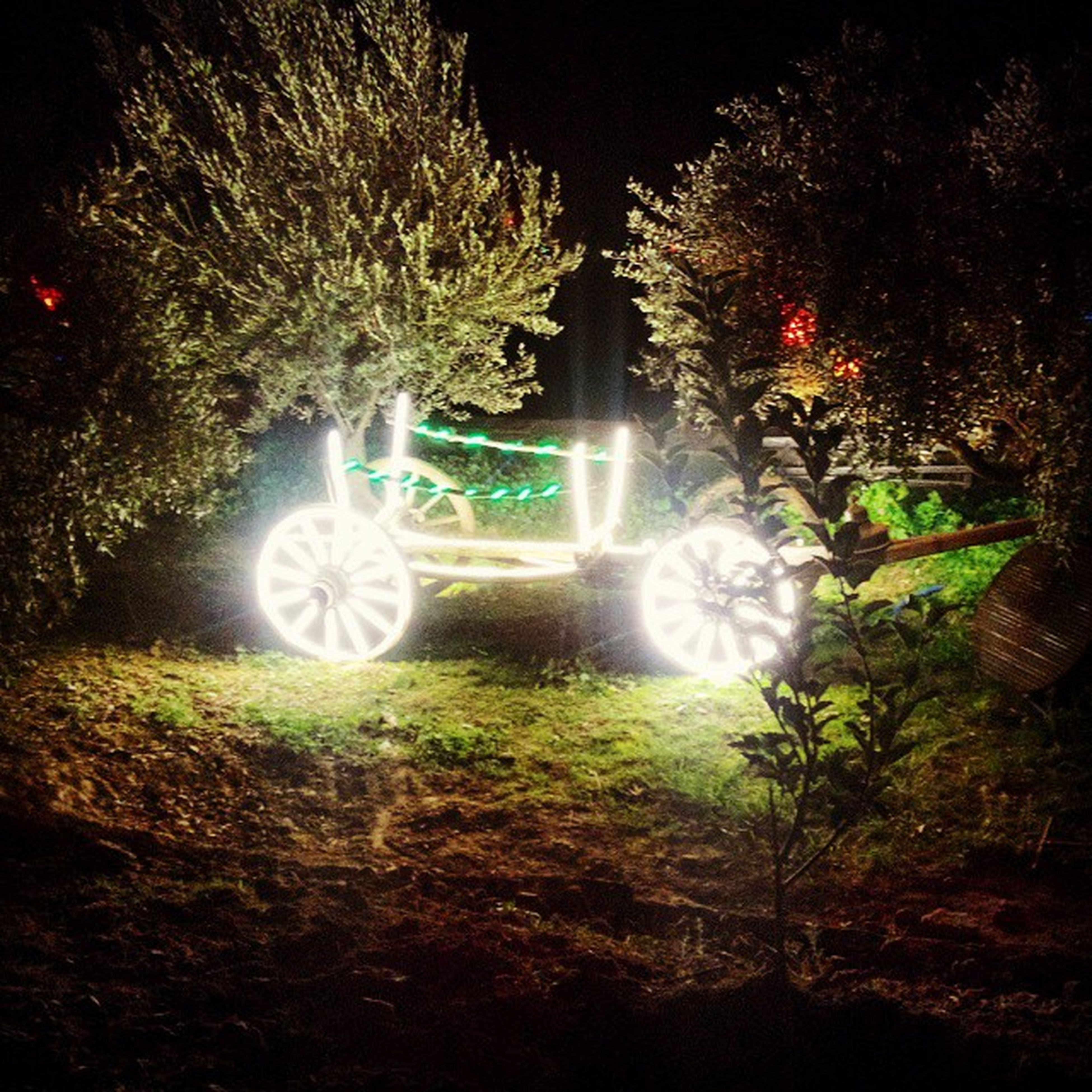 illuminated, night, tree, glowing, lighting equipment, long exposure, light - natural phenomenon, green color, street light, motion, growth, park - man made space, outdoors, no people, nature, fountain, plant, multi colored, tranquility, blurred motion