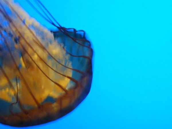 Jelly Fish Water Showcase: January