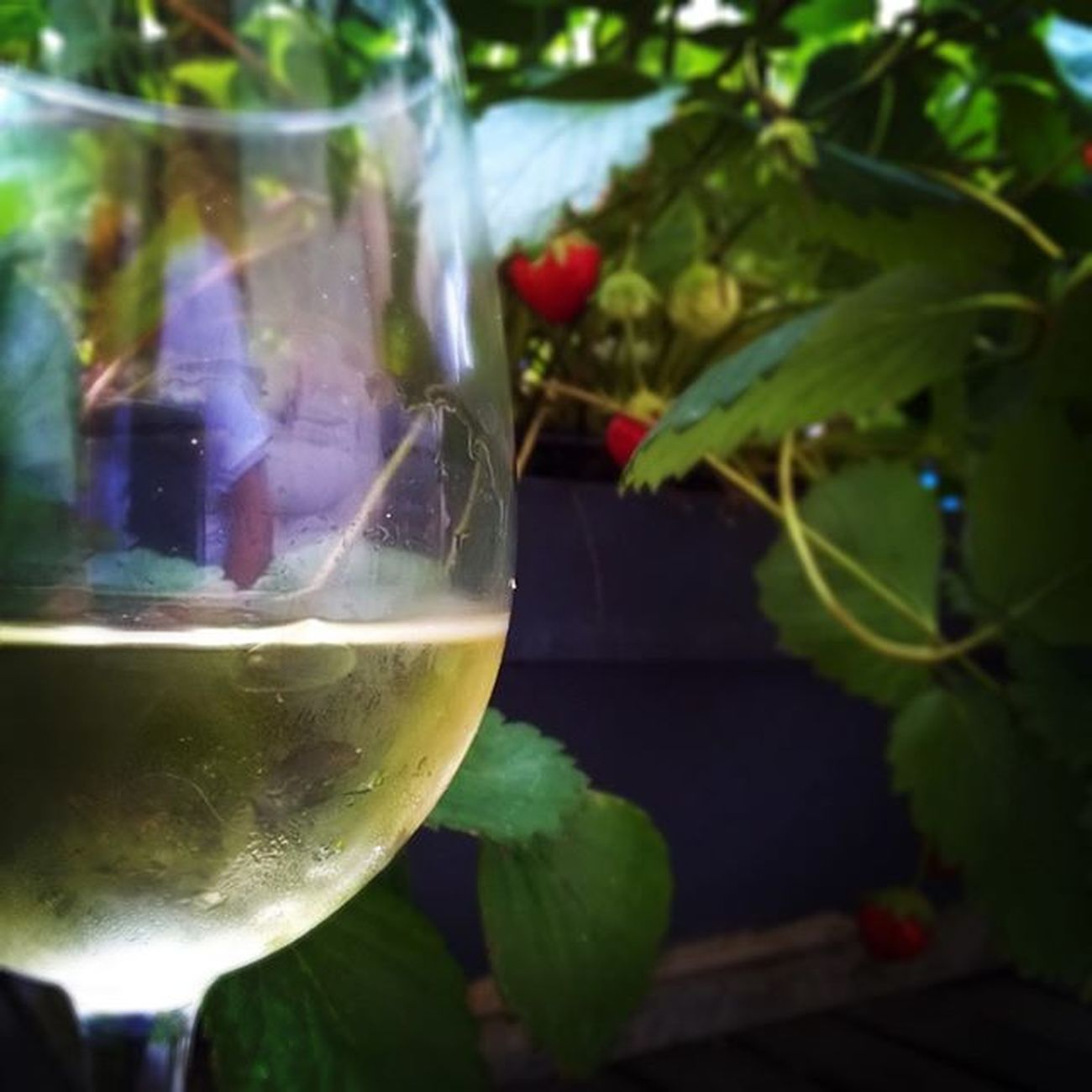 Gold. Locavore Withewine Instawine Home Strawberries Wine Winolife Lirac