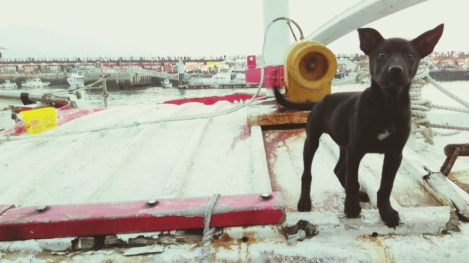 Dog Days Playing With The Animals Dog Life Dog Cute Dog  Cute Pets Black On The Ship Riverside Fishing Boat