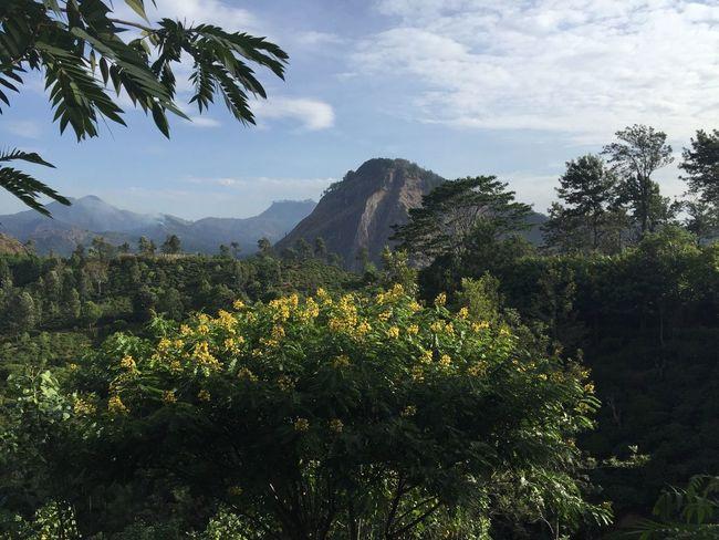 Little Adam's Peak, Sri Lanka - juillet 2016 Voyage Travel Explore Hiking Mountains Sri Lanka Landscape Surnatural Little Adam's Peak Photography Picoftheday Discover  Nature Outdoors View Panoramic Photography