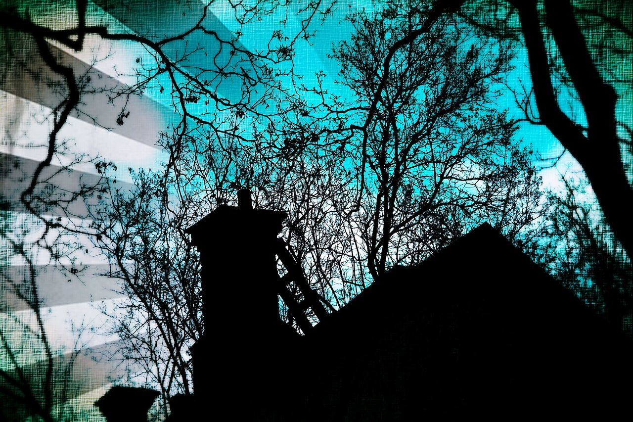 tree, built structure, architecture, low angle view, silhouette, building exterior, growth, branch, no people, day, outdoors, nature, beauty in nature, sky