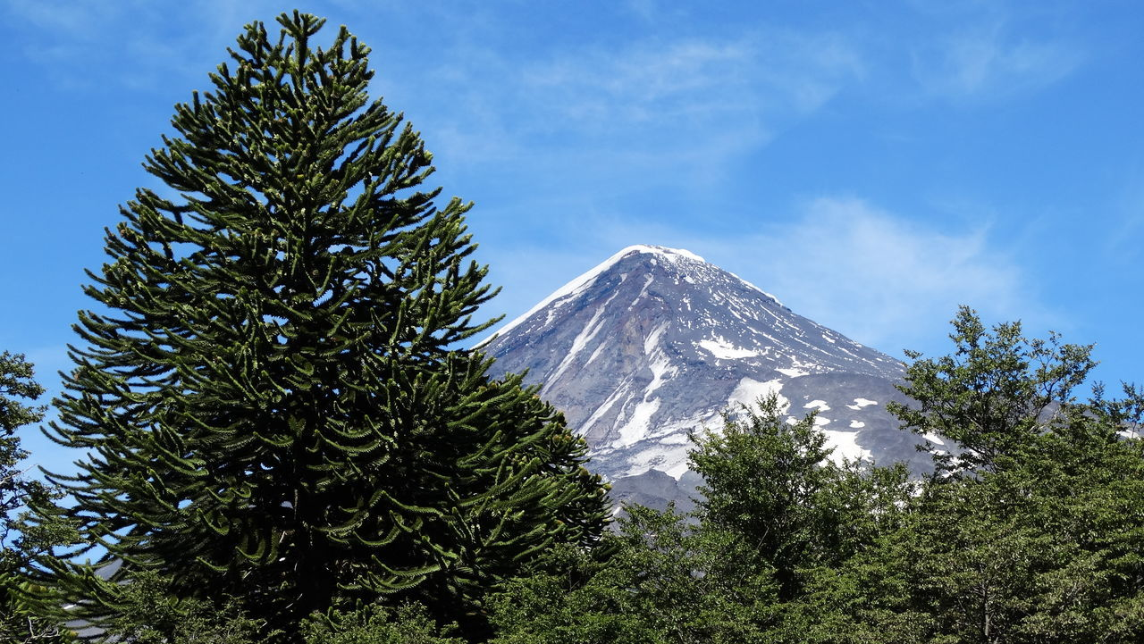 Volcano Villarrica with Araucaria from Argentina Limit Chile. Volcanoeslover TrekkingDay Outdoors Summer2016 Chile♥ Argentina Photography Argentinian Beautiful Beautiful View Beautiful Day Amazing View Villarrica Volcano Villarrica Skyviewers Beautiful Sky Volcano