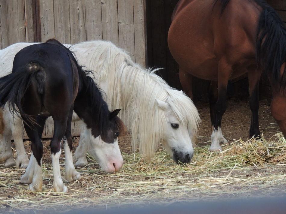 Blackandwhite EyeEm Nature Lover Eyemphotography Horse Horse Life Horse Photography  White Album White Horse White Horse Portrait