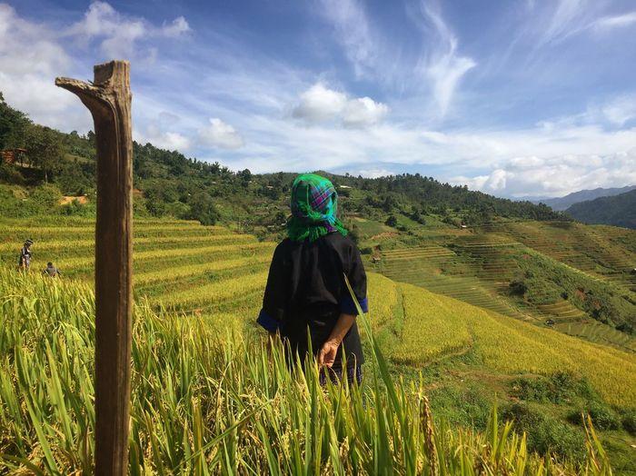 What a productive season ! Mucangchai Vietnam Yenbai, Vietnam Mountainous Area Vietnam Minority Tribe RiceTerraces Rear View Field Landscape Growth Nature