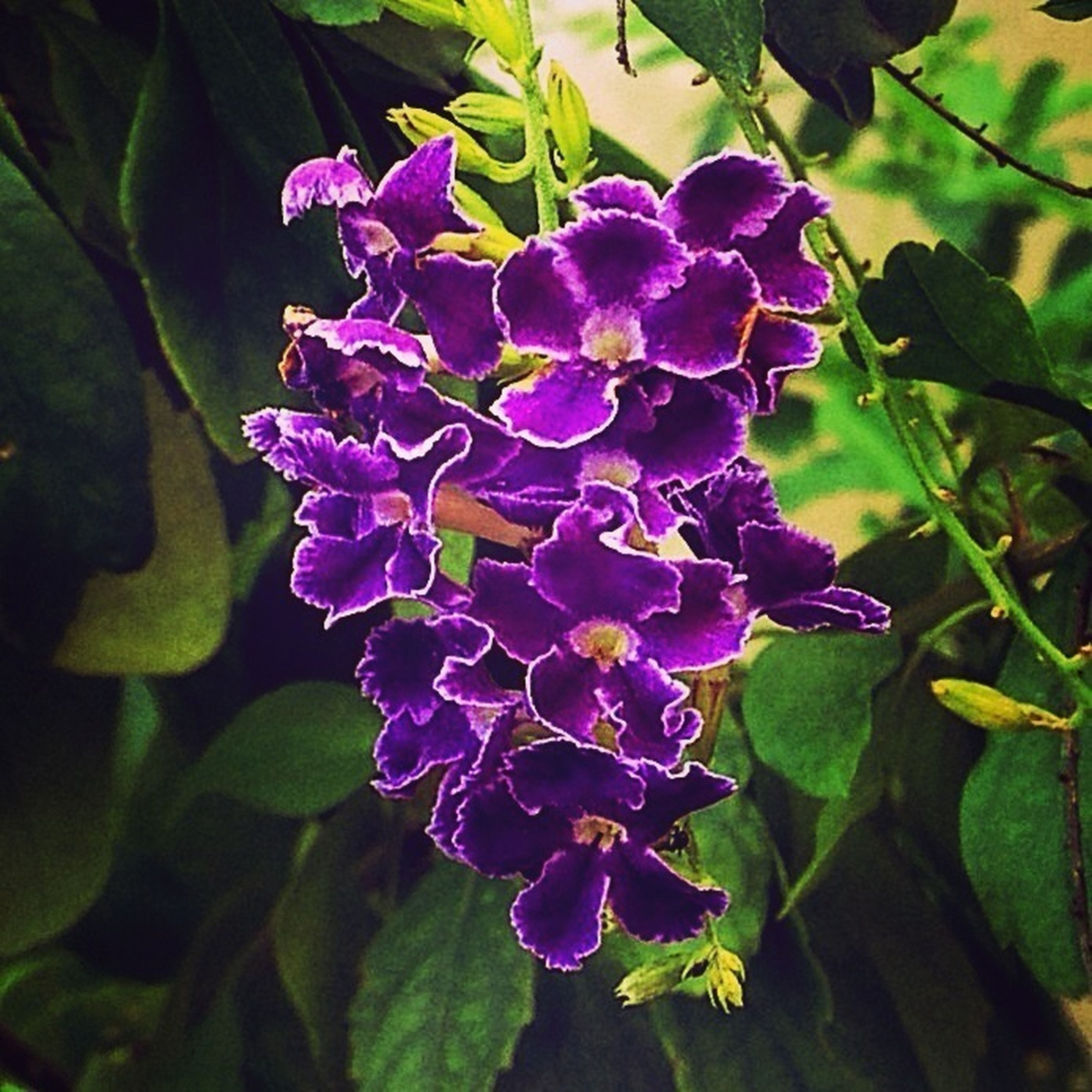 flower, freshness, purple, petal, growth, fragility, flower head, beauty in nature, leaf, close-up, plant, blooming, nature, focus on foreground, in bloom, green color, park - man made space, blossom, outdoors, no people