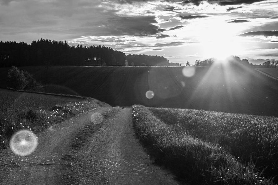 Agriculture Farm Field Rural Scene Nature Landscape Outdoors No People Scenics Sunlight Day Sky Beauty In Nature Cereal Plant Freshness Blackandwhite The Great Outdoors - 2017 EyeEm Awards Neighborhood Map Lens Flare Road Lights My Way Salzkammergut Austria Vorchdorf BYOPaper!