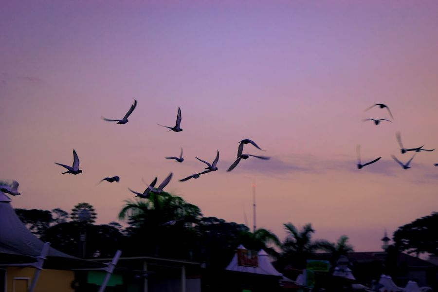 Let the birds fly freely. Happy Earth day everyone! Earth Day Birds Of EyeEm  Throughmyeyes Mypointofview Eye4photography  EyeEm Gallery Simply Beautiful Zamboanga City Write With Colors Eyeem Philippines