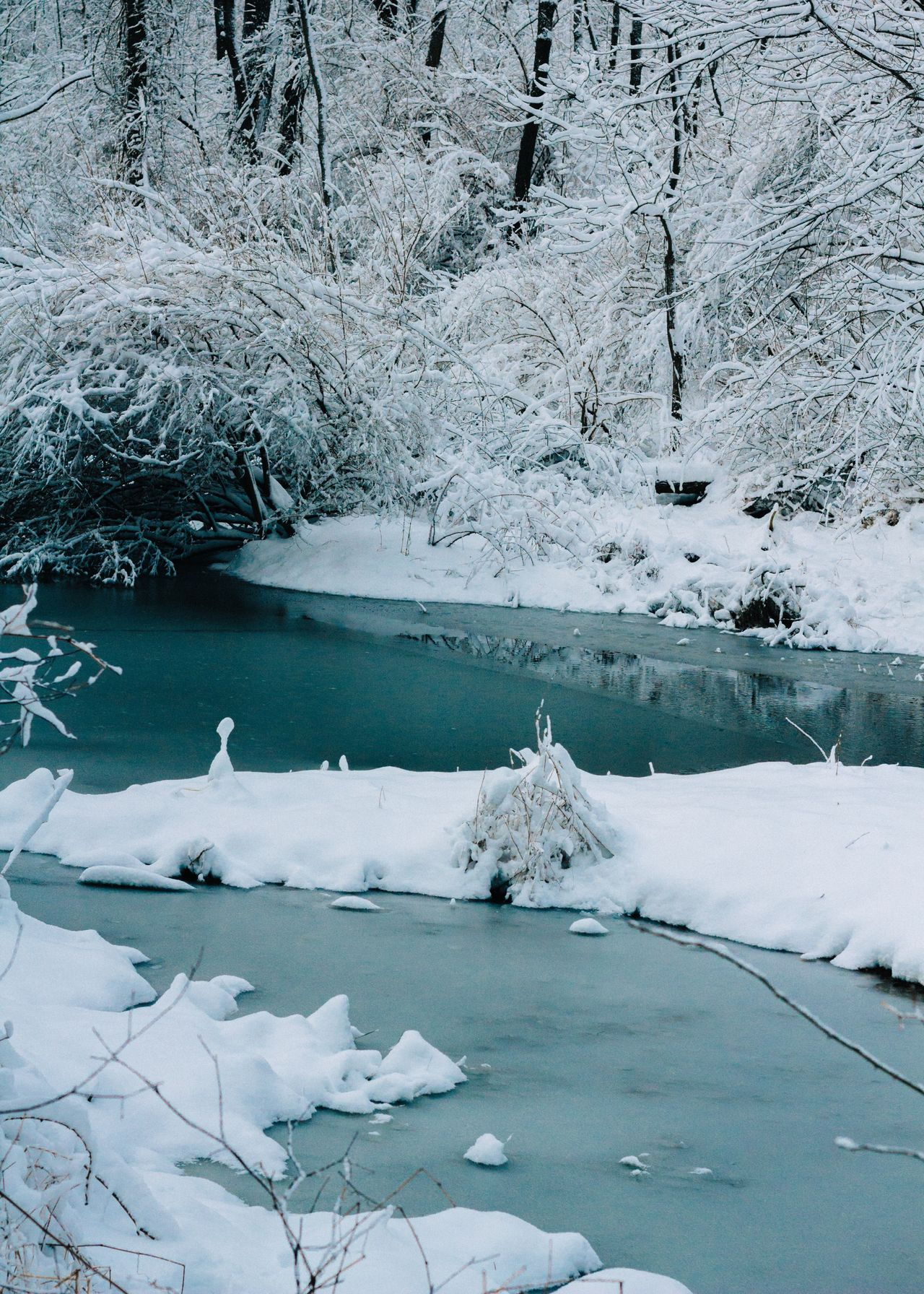 Cold Temperature Winter Snow Frozen Nature Ice Water Tranquility Melting Frost Beauty In Nature Lake Scenics Outdoors Day Global Warming No People Tree Frozen Lake Glacier
