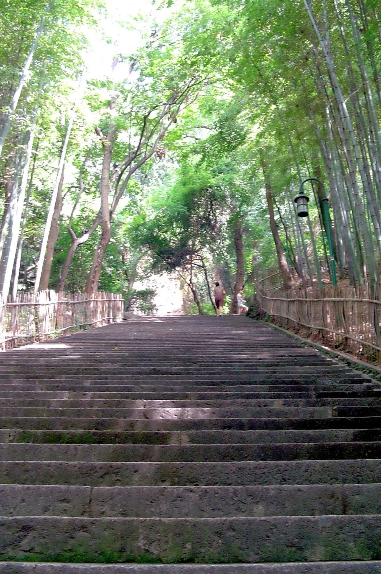 Architecture City Day Nature No People Outdoors Staircase Steps And Staircases The Way Forward Tree