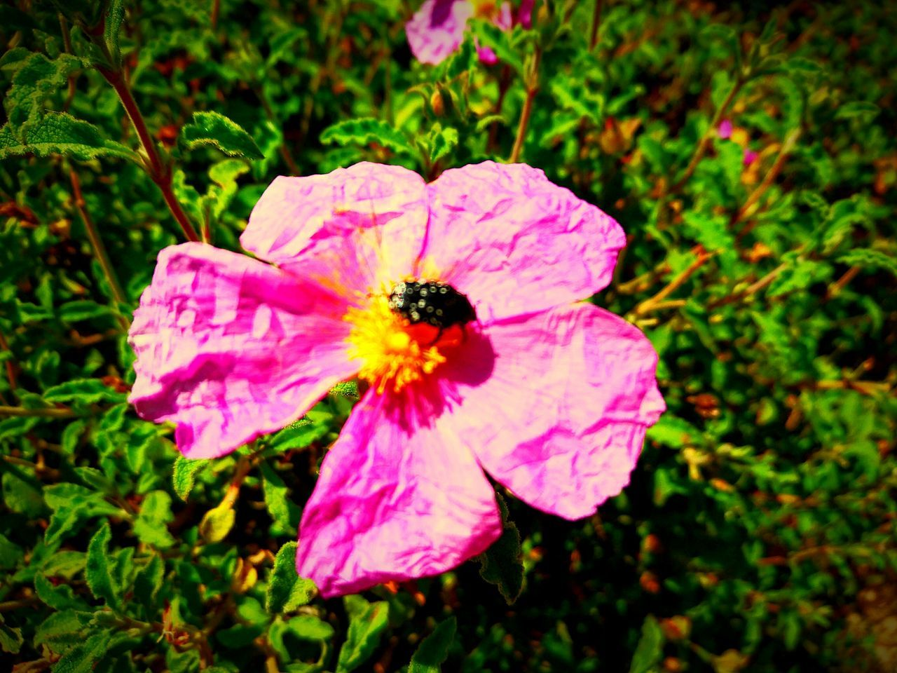 Taking Photos Check This Out Natures Diversities Enjoying Life Natural Beauty Naturelovers Nature Nature_collection EyeEm Nature Lover Nature Photography EyeEm Gallery EyeEm Best Shots - Nature Eyeemphotography Naturesdiversities EyeEm Best Shots Flower Flower Collection Bug On A Flower The Great Outdoors - 2016 EyeEm AwardsBugslife Flowers_collection Flowerlovers Flower And Insect Insect Insect On A Flower