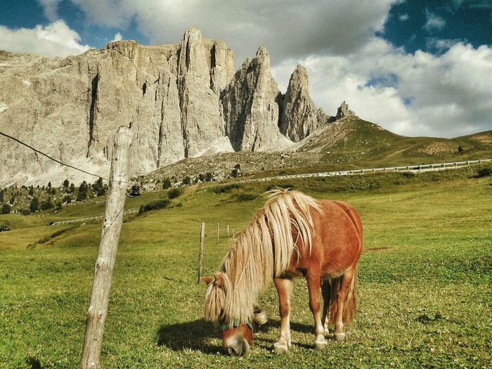 Adventure Club Beauty In Nature Outdoors Nature On The Way The Journey Is The Destination Nature Photography Landscape Tranquil Scene Horizon Over Land Sky Horse Photography  Dolomites Italy Showcase July Hidden Gems  Beautiful In Nature Animal Themes Chance Encounters Betterlandscapes Miles Away The Great Outdoors - 2017 EyeEm Awards