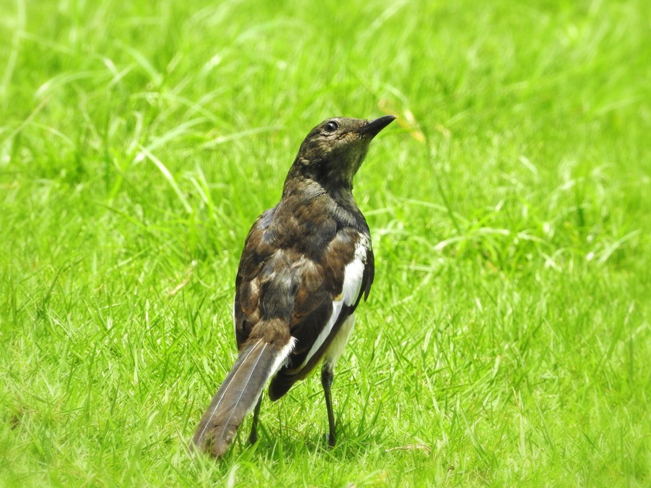 Grass Bird Animal Themes One Animal Animals In The Wild Green Color Nature Field Animal Wildlife No People Growth Day Outdoors Perching Close-up