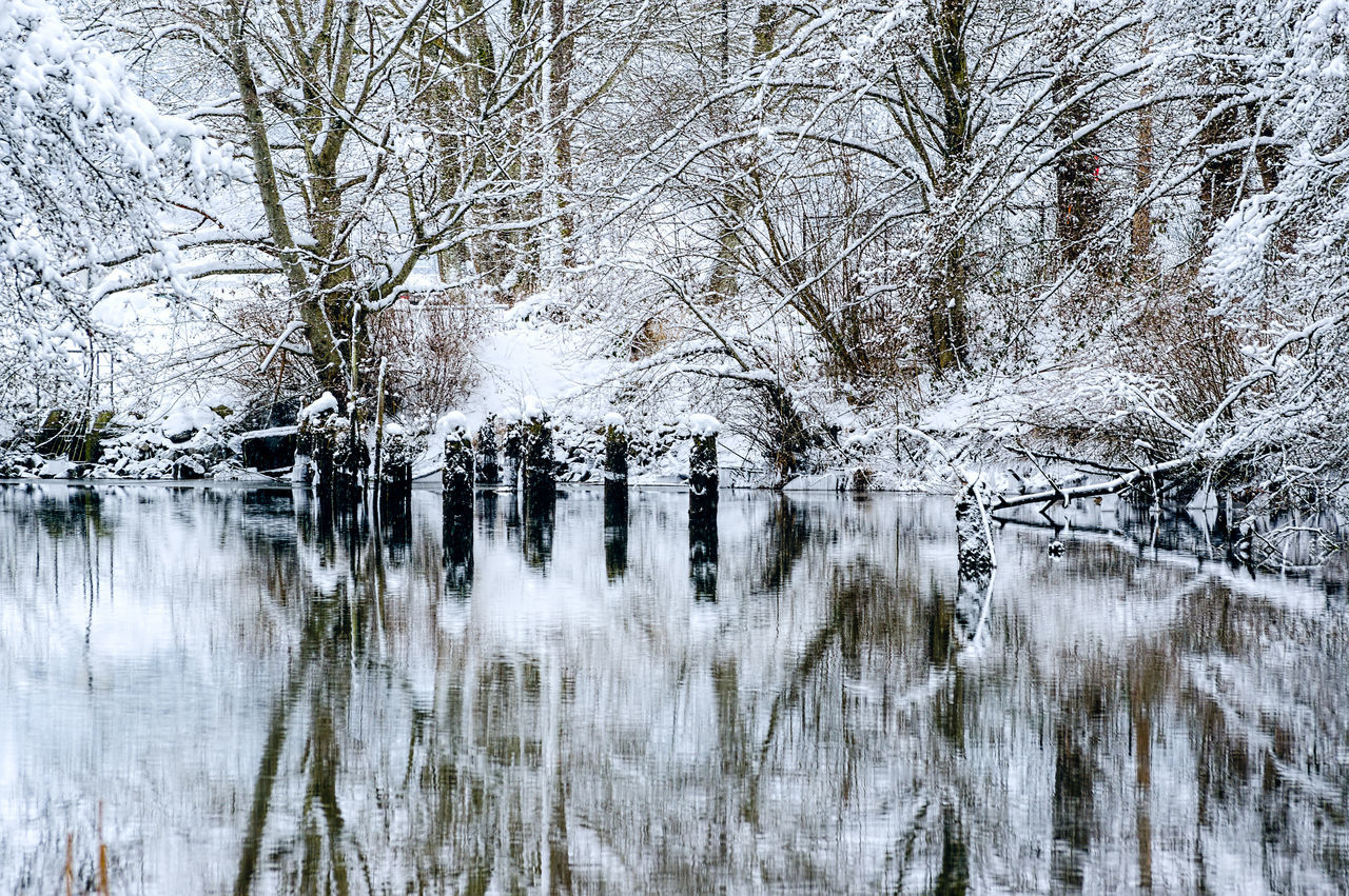 Bare Tree Beauty In Nature Cold Temperature Day Growth Lake Nature No People Outdoors Reflection Scenics Sky Snow Tranquil Scene Tranquility Tree Water Winter
