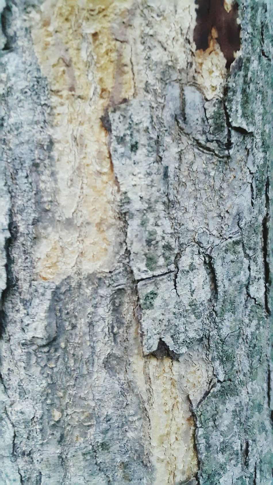 Textured  Full Frame Backgrounds Rough No People Day Close-up Pattern Outdoors Architecture Bolt Nut Bark Wood Surface Wood - Material Wood