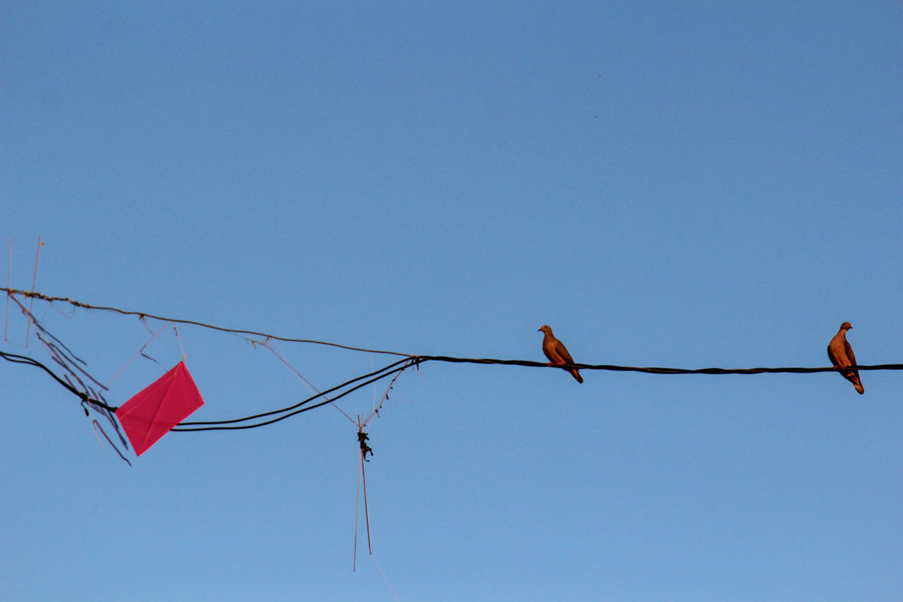 copy space, hanging, clear sky, low angle view, flag, day, no people, blue, outdoors, nature, bird, animal themes