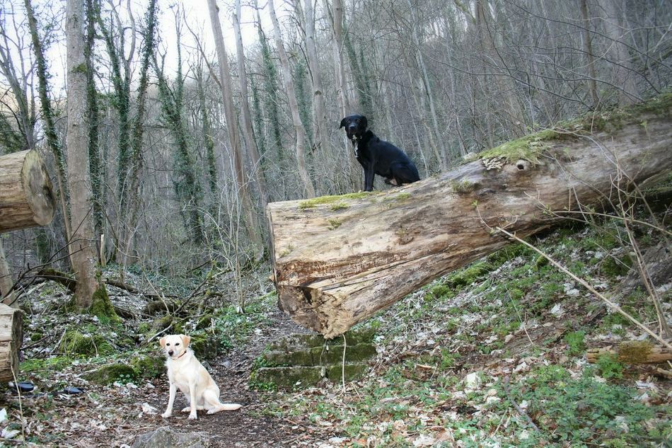 My Dogs Are Cooler Than Your Kids Playing With The Animals First Eyeem Photo Nature Bad Überkingen