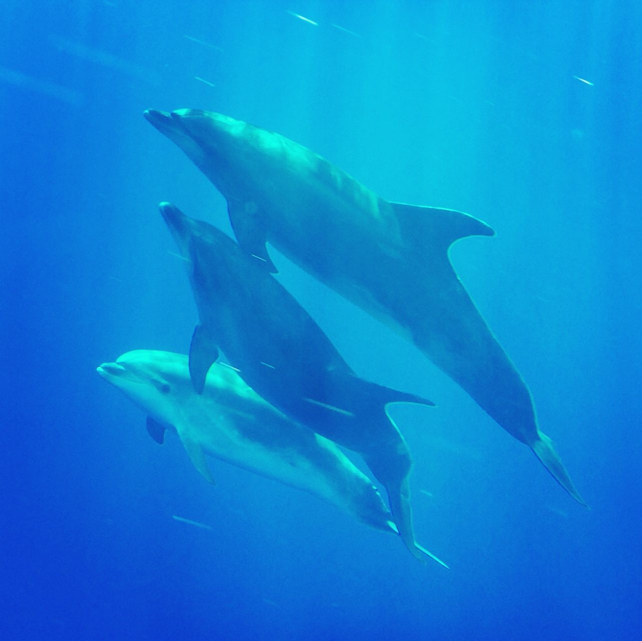 Dolfins underwater Dolphins Water Ocean