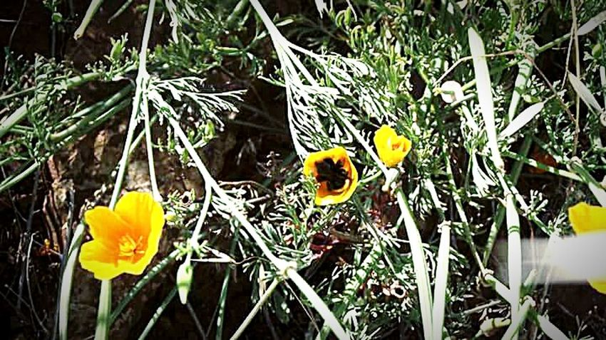 Taking Photos ❤ Nature Photography My Photography Leaves And Flowers Green Leaves Flowers, Nature And Beauty Flower Photography California Poppies Flower Porn
