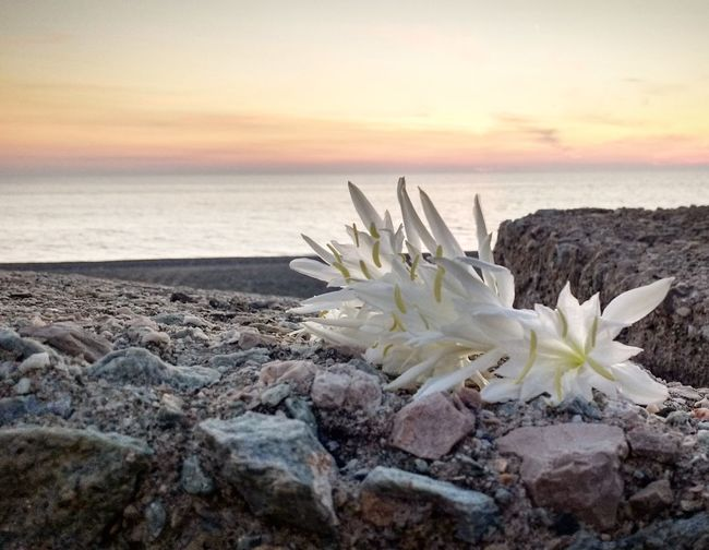 Horizon Over Water Beauty In Nature Sky Water Sunset Sea Beach Scenics Tranquility Outdoors Flower Cloud Photography Photooftheday Rosy Like4like VSCO Seascapes Love