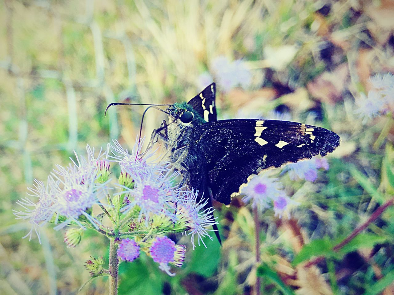 One Animal Animal Themes Insect Animals In The Wild Butterfly - Insect Nature Plant Focus On Foreground Close-up Flower Fragility Beauty In Nature No People Outdoors Day Animal Wildlife Butterfly Freshness Pollination